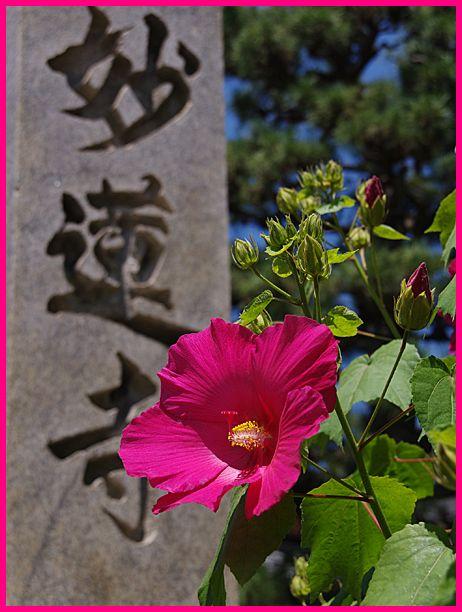 201306_3nishijin04