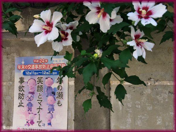 201306_4shokokuji01