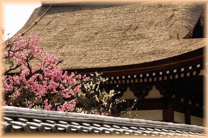 2014031daitokuji11