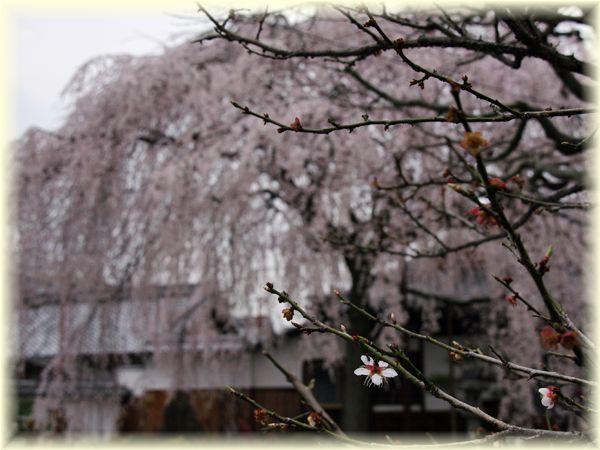 2014031_honmanji03