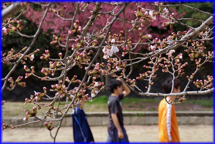 2014033_kamogawa05