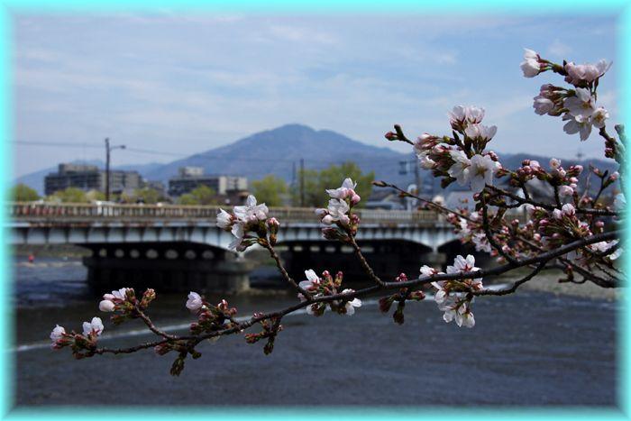 2014033_kamogawa06