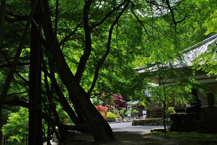 2014051_kochidani16