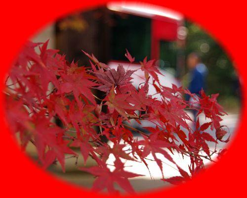 2014111_syogunzuka15