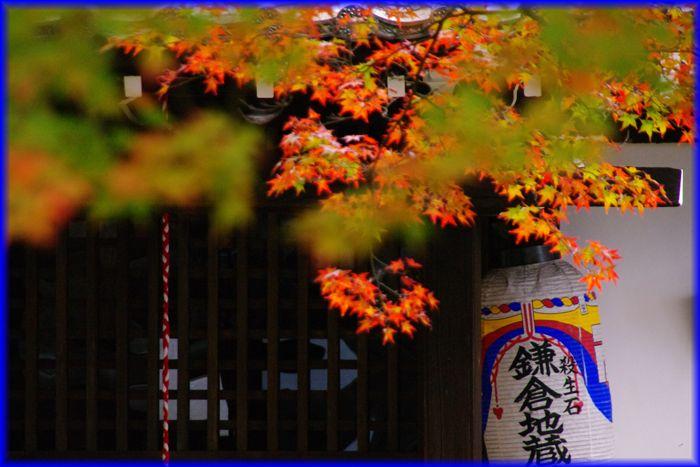 2014113_shinnyodo04