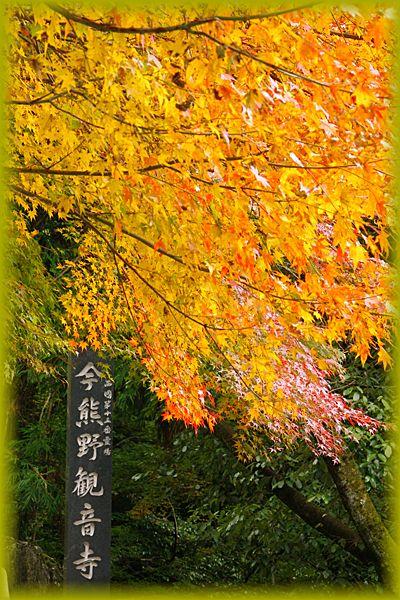 2014113imakumano01