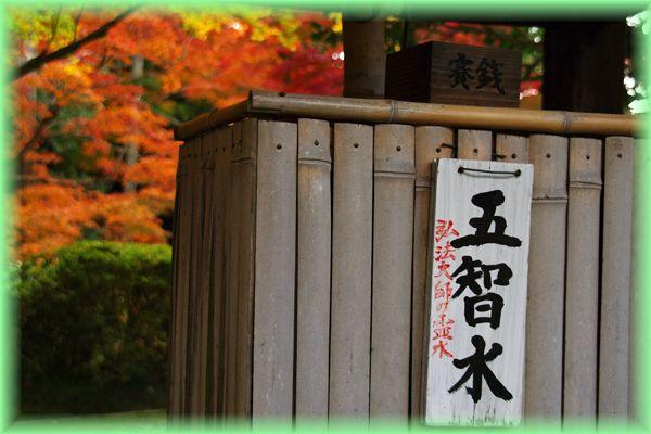 2014113imakumano05