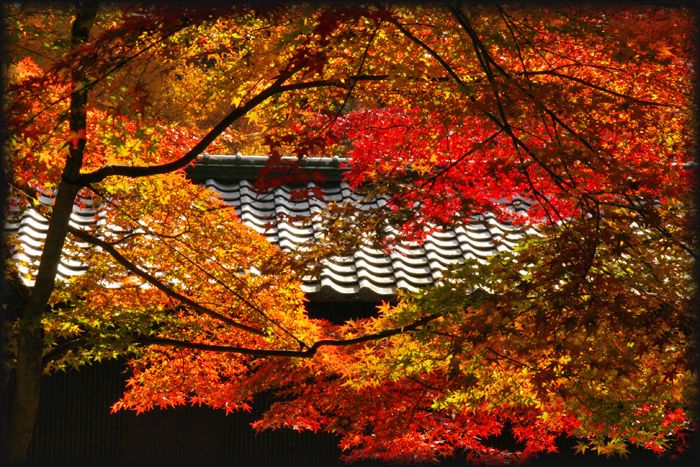 2014113imakumano06