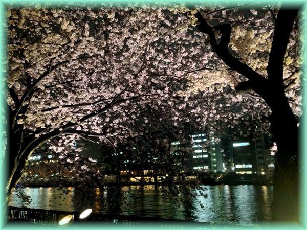 201504tenma_sakura03