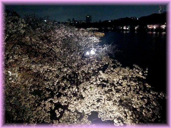 201504tenma_sakura06
