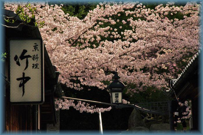 2014041gion_sakura02