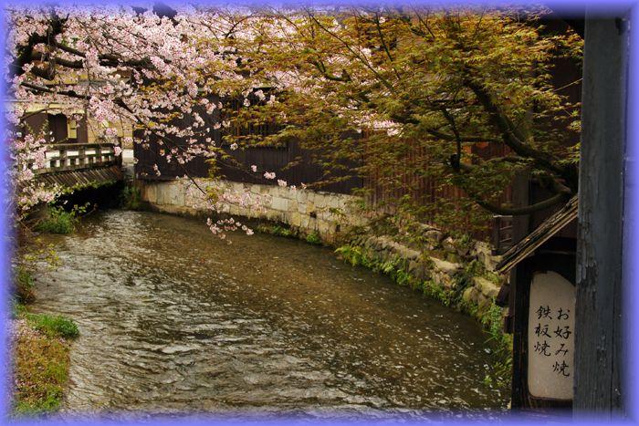 2014042sirakawa_sakura04