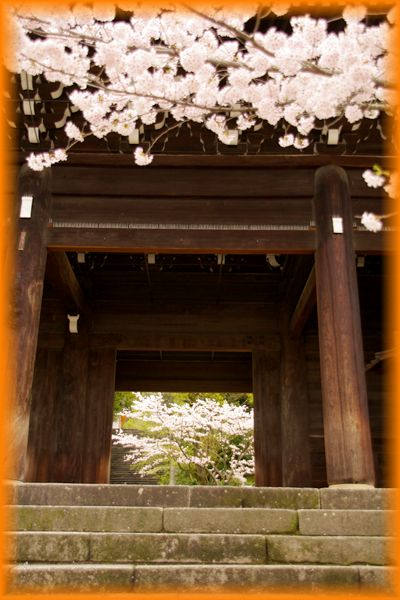 2014043chionin_sakura02