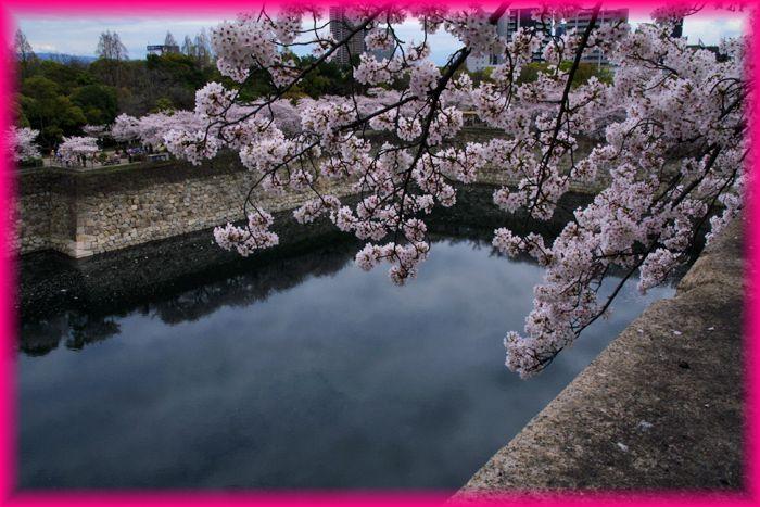 201404osaka_sakura2_07
