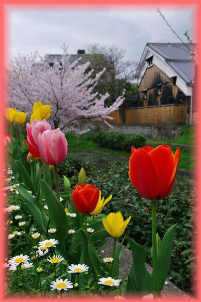 2014045fushimi_sakura07