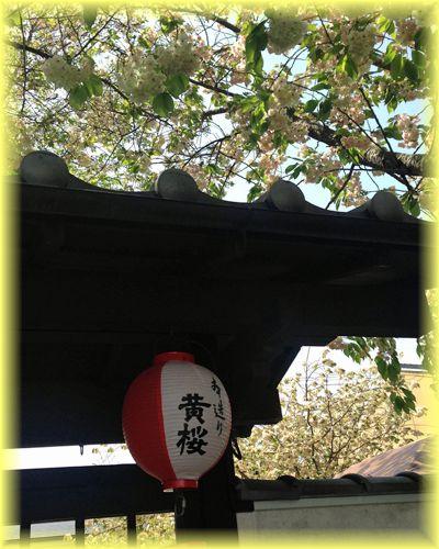 2015041_fusimi_kizakura01