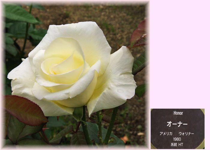 201505nakanoshima05