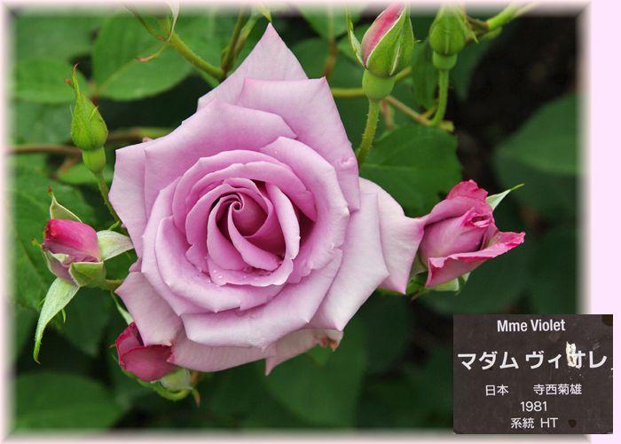 201505nakanoshima11