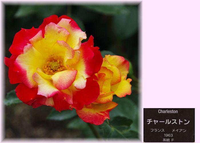 201505nakanoshima22