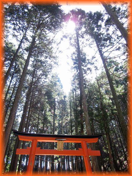 201505_kyoto_trail07