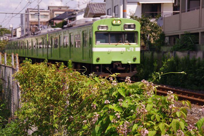 Toufukuji09