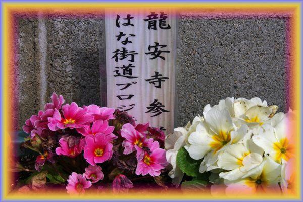 201603nisijinn_hana01
