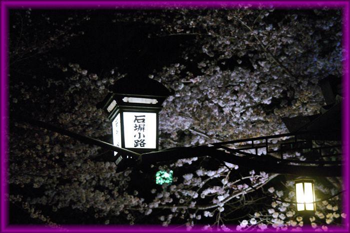201604kyoto_sakura13