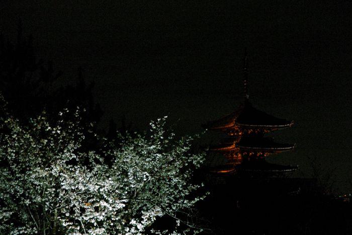 201604kyoto_sakura15