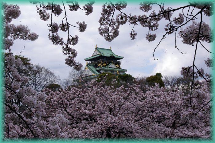 201604osaka_sakura02