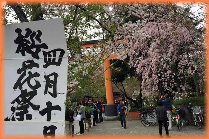 201604kyoto_sakura30_2