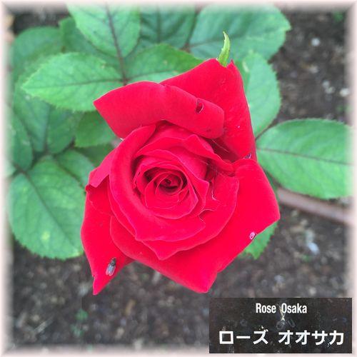 201610osaka_gallery14