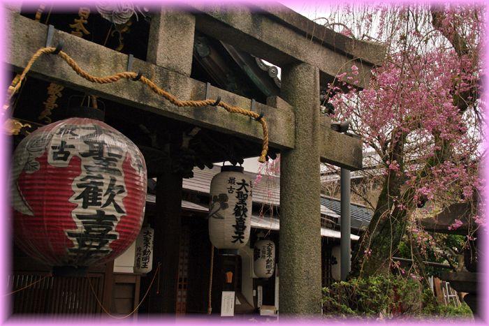 201704_2kyotosakura08