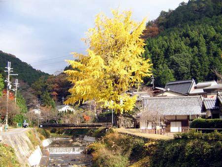 Kurama16